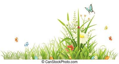 zomer, bloemen, groene