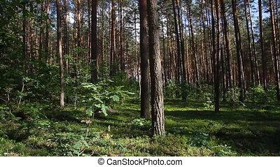 zomer, bos, pan