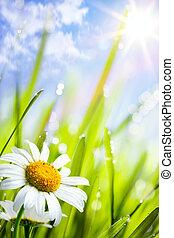 zomer, gras, natuurlijke , achtergrond, bloemen, madeliefjes