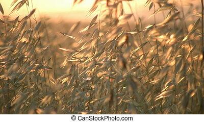 zomer, gras
