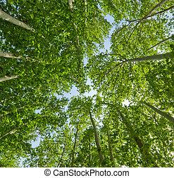 zomer, groene achtergrond, bomen