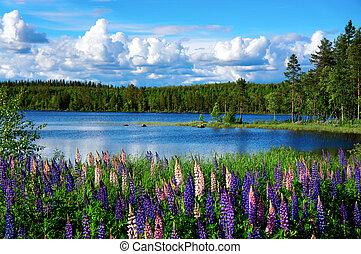 zomer, landscape, scandinavische