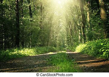 zomer, onder, bri, bomen, bos