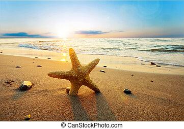 zomer, strand, zonnig, zeester