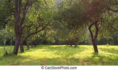 zomer, tuin, appel