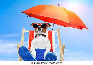 zomer vakantie, dog, vakantie