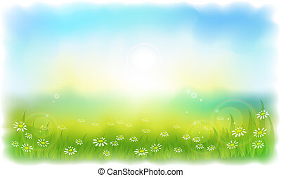 zomer, weide, daisies., sun-drenched, zonnig, outdoors., dag