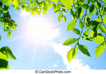 zon, bladeren, groene, straal