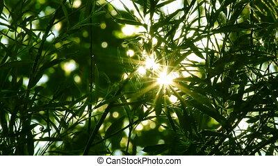 zon, boompje, helder, door, gebladerte, shines