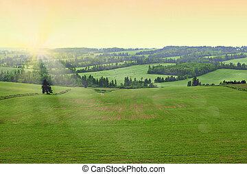 zonneschijn., morgen, akker, fris, vroeg, farmer