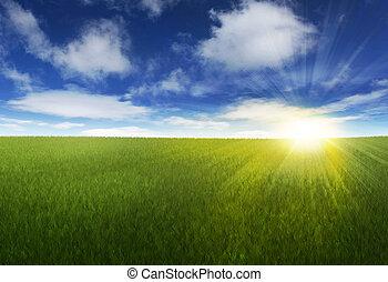 zonnig, op, hemel, grassig, akker
