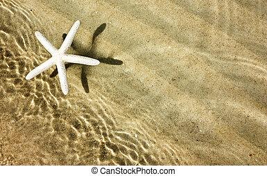 zonnig, strand, zeester, zomer