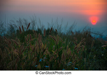 zonsondergangen