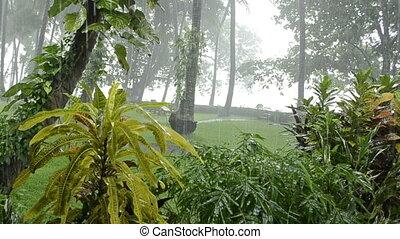 zware, tropisch bos, regen